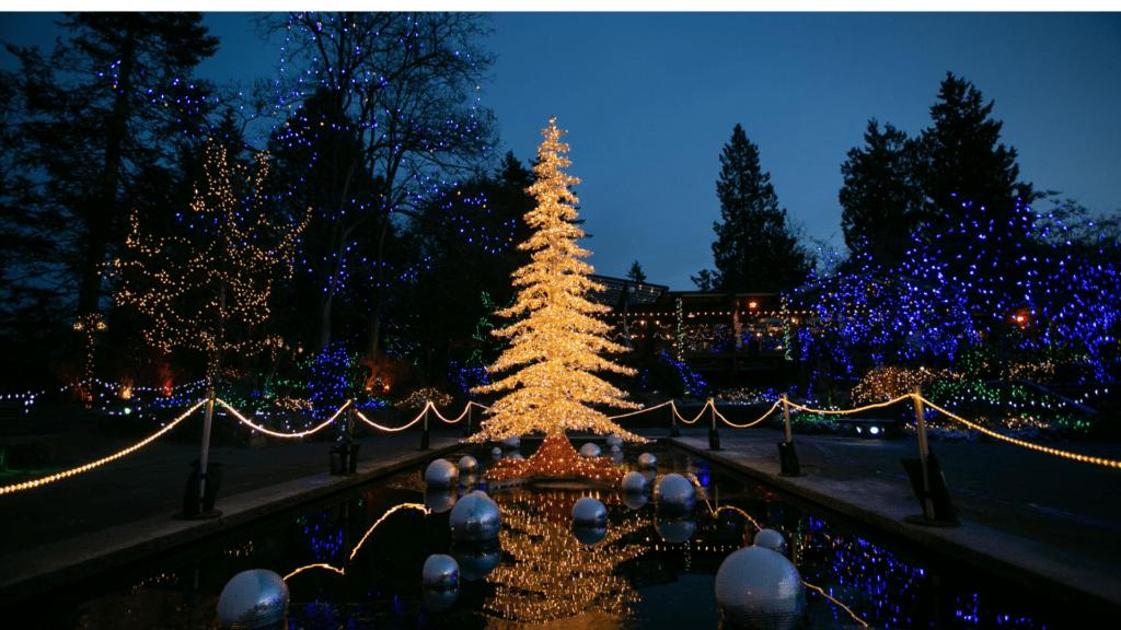 Christmas Tree Festival Of Lights (3)