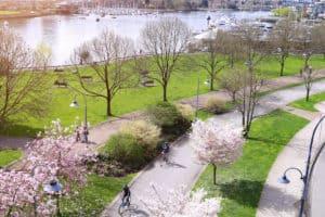 Vancouver blossom spring city image